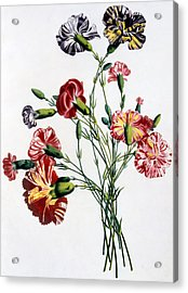 Bouquet Of Carnations Acrylic Print