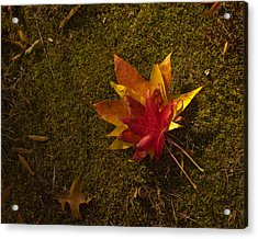 Acrylic Print featuring the photograph Bouquet Of Leaves by Jose Oquendo