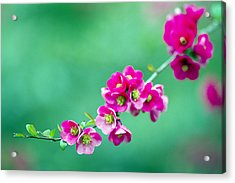 Bouquet On A Limb Acrylic Print by Rebecca Cozart