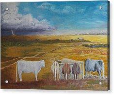 Bovine Theory Acrylic Print