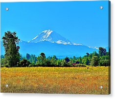 Bovine View Of Mt. Rainier Acrylic Print