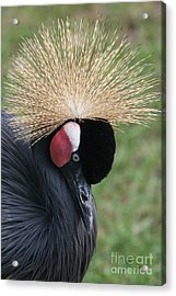 Bow Your Head Acrylic Print by Judy Whitton