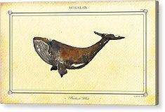 Bowhead Whale Acrylic Print by Juan  Bosco