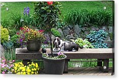 Bowie In The Garden Acrylic Print