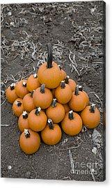 Bowling For Pumpkins Acrylic Print by David Millenheft