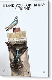 Box 15 The Introduction Acrylic Print by Michael Rucci