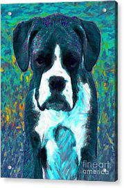 Boxer 20130126v4 Acrylic Print by Wingsdomain Art and Photography