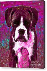 Boxer 20130126v7 Acrylic Print by Wingsdomain Art and Photography