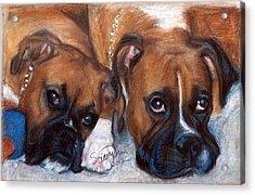 Boxer Buddies Acrylic Print by Sciandra