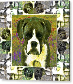 Boxer Dog 20130126 Acrylic Print by Wingsdomain Art and Photography