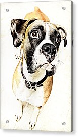 Acrylic Print featuring the photograph Boxer Dog Poster by Peter v Quenter