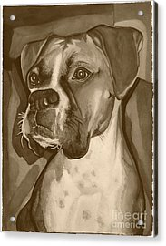 Boxer Dog Sepia Print Acrylic Print by Robyn Saunders