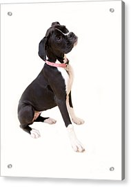 Boxer Girl 1 Acrylic Print by Rebecca Cozart