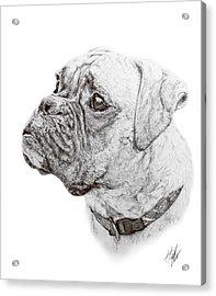 Boxer Acrylic Print by Hannah Taylor