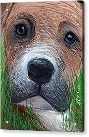 Boxer Acrylic Print by Heidi Creed