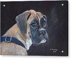 Boxer Acrylic Print by Hendrik Hermans