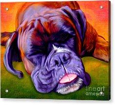 Boxer Acrylic Print by Iain McDonald