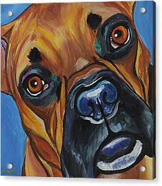 Boxer Acrylic Print by Melissa Smith