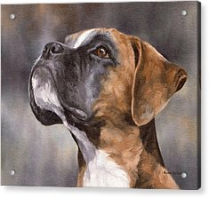 Boxer Painting Acrylic Print by Rachel Stribbling