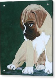 Boxer Pup Acrylic Print by Michele Turney