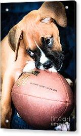 Boxer Puppy Cuteness Acrylic Print