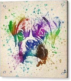 Boxer Splash Acrylic Print by Aged Pixel