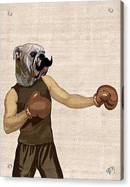 Boxing Bulldog Portrait Acrylic Print by Kelly McLaughlan