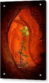 Boynton Canyon 04-343 Acrylic Print by Scott McAllister