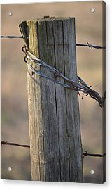 Braced Acrylic Print by Kelly Kitchens
