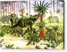 Brachyceratops Dinosaurs Acrylic Print