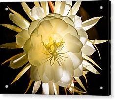 Brahma Kamala Flower Acrylic Print