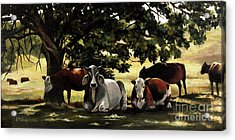 Brahma's Mamas Acrylic Print by Suzanne Schaefer