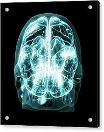 Brain Anatomy Acrylic Print by Thierry Berrod, Mona Lisa Production/ Science Photo Library