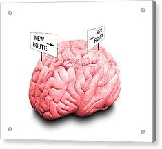 Brain Plasticity Acrylic Print by Victor De Schwanberg/science Photo Library