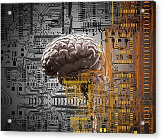 Brain Under Layers Of Circuit Board,  Acrylic Print by John M Lund Photography Inc