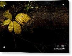 Bramble Tree Acrylic Print by Anne Gilbert