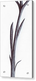 Branch Of A Fragment Of Life Acrylic Print