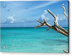 Branch Over The Caribbean Acrylic Print