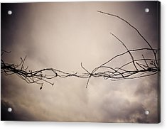Branches Against A Winter Sky Acrylic Print by Vivienne Gucwa