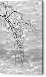 Branches And Clouds Acrylic Print by Robert Ullmann
