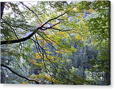 Branches And Leafs Acrylic Print