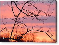 Acrylic Print featuring the photograph Branches Meet The Sky by Dacia Doroff