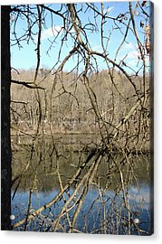 Branches Acrylic Print by Melissa Stoudt