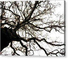Branches Acrylic Print by Michelle Calkins