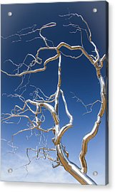 Branches Of Silver Acrylic Print