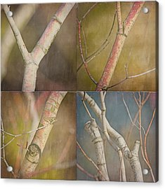 Branches Times Four Acrylic Print by Bonnie Bruno