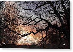 Branches Acrylic Print by Wayne King