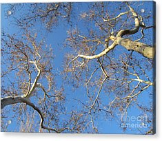 Branching Out Acrylic Print by Melissa Stinson-Borg