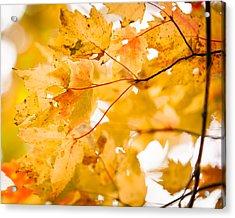 Branching Yellow Acrylic Print by Melinda Ledsome