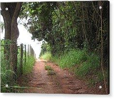 Brasil Rural 4 Acrylic Print by Maria Akemi  Otuyama